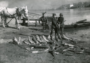 Fisherman and Fishes